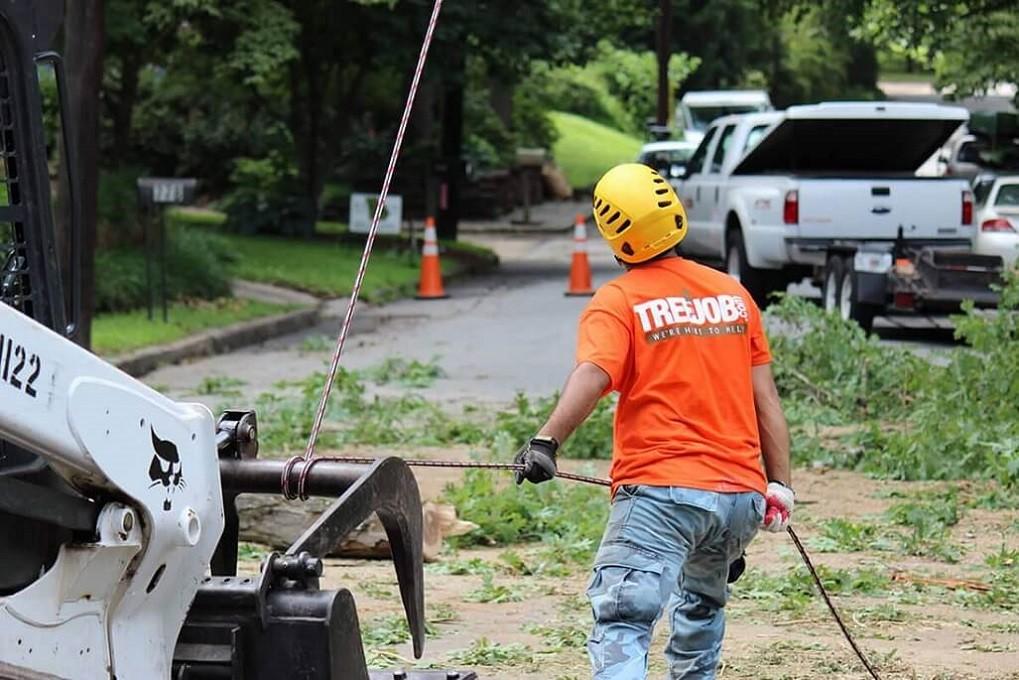 Arborist Consultations-Asheville Tree Trimming and Stump Grinding Services-We Offer Tree Trimming Services, Tree Removal, Tree Pruning, Tree Cutting, Residential and Commercial Tree Trimming Services, Storm Damage, Emergency Tree Removal, Land Clearing, Tree Companies, Tree Care Service, Stump Grinding, and we're the Best Tree Trimming Company Near You Guaranteed!
