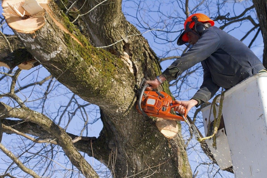 Asheville Tree Trimming and Stump Grinding Services Header Image-We Offer Tree Trimming Services, Tree Removal, Tree Pruning, Tree Cutting, Residential and Commercial Tree Trimming Services, Storm Damage, Emergency Tree Removal, Land Clearing, Tree Companies, Tree Care Service, Stump Grinding, and we're the Best Tree Trimming Company Near You Guaranteed!
