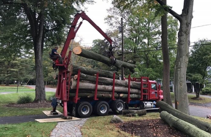 Commercial Tree Services-Asheville Tree Trimming and Stump Grinding Services-We Offer Tree Trimming Services, Tree Removal, Tree Pruning, Tree Cutting, Residential and Commercial Tree Trimming Services, Storm Damage, Emergency Tree Removal, Land Clearing, Tree Companies, Tree Care Service, Stump Grinding, and we're the Best Tree Trimming Company Near You Guaranteed!