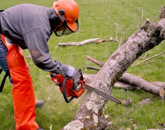 Emergency Tree Removal-Asheville Tree Trimming and Stump Grinding Services-We Offer Tree Trimming Services, Tree Removal, Tree Pruning, Tree Cutting, Residential and Commercial Tree Trimming Services, Storm Damage, Emergency Tree Removal, Land Clearing, Tree Companies, Tree Care Service, Stump Grinding, and we're the Best Tree Trimming Company Near You Guaranteed!