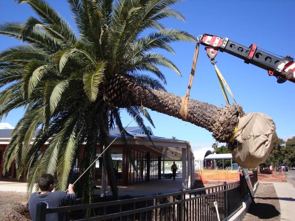 Palm Tree Removal-Asheville Tree Trimming and Stump Grinding Services-We Offer Tree Trimming Services, Tree Removal, Tree Pruning, Tree Cutting, Residential and Commercial Tree Trimming Services, Storm Damage, Emergency Tree Removal, Land Clearing, Tree Companies, Tree Care Service, Stump Grinding, and we're the Best Tree Trimming Company Near You Guaranteed!