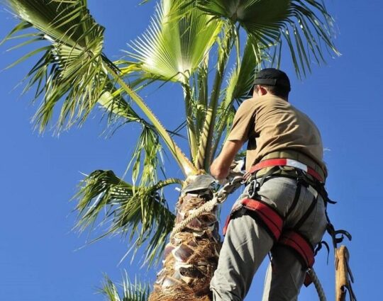 Palm Tree Trimming-Asheville Tree Trimming and Stump Grinding Services-We Offer Tree Trimming Services, Tree Removal, Tree Pruning, Tree Cutting, Residential and Commercial Tree Trimming Services, Storm Damage, Emergency Tree Removal, Land Clearing, Tree Companies, Tree Care Service, Stump Grinding, and we're the Best Tree Trimming Company Near You Guaranteed!