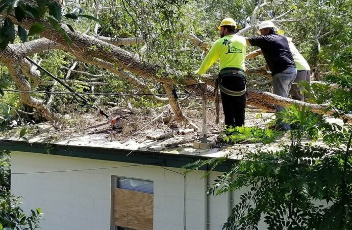 Storm Damage-Asheville Tree Trimming and Stump Grinding Services-We Offer Tree Trimming Services, Tree Removal, Tree Pruning, Tree Cutting, Residential and Commercial Tree Trimming Services, Storm Damage, Emergency Tree Removal, Land Clearing, Tree Companies, Tree Care Service, Stump Grinding, and we're the Best Tree Trimming Company Near You Guaranteed!