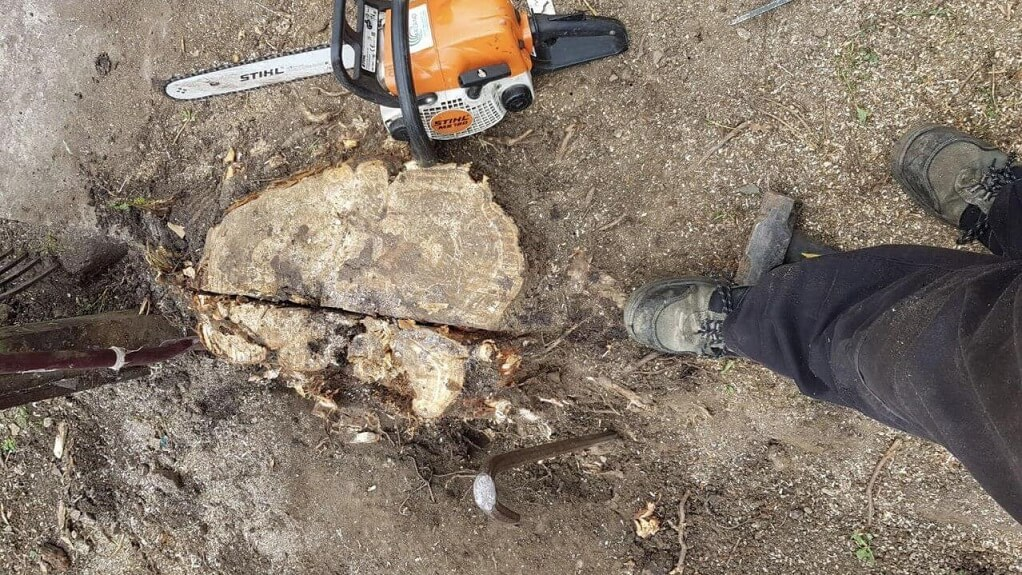 Stump Removal-Asheville Tree Trimming and Stump Grinding Services-We Offer Tree Trimming Services, Tree Removal, Tree Pruning, Tree Cutting, Residential and Commercial Tree Trimming Services, Storm Damage, Emergency Tree Removal, Land Clearing, Tree Companies, Tree Care Service, Stump Grinding, and we're the Best Tree Trimming Company Near You Guaranteed!