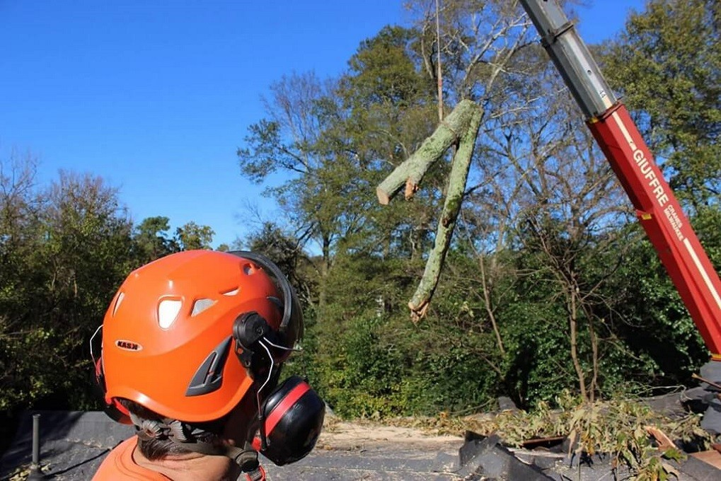 Tree Cutting-Asheville Tree Trimming and Stump Grinding Services-We Offer Tree Trimming Services, Tree Removal, Tree Pruning, Tree Cutting, Residential and Commercial Tree Trimming Services, Storm Damage, Emergency Tree Removal, Land Clearing, Tree Companies, Tree Care Service, Stump Grinding, and we're the Best Tree Trimming Company Near You Guaranteed!