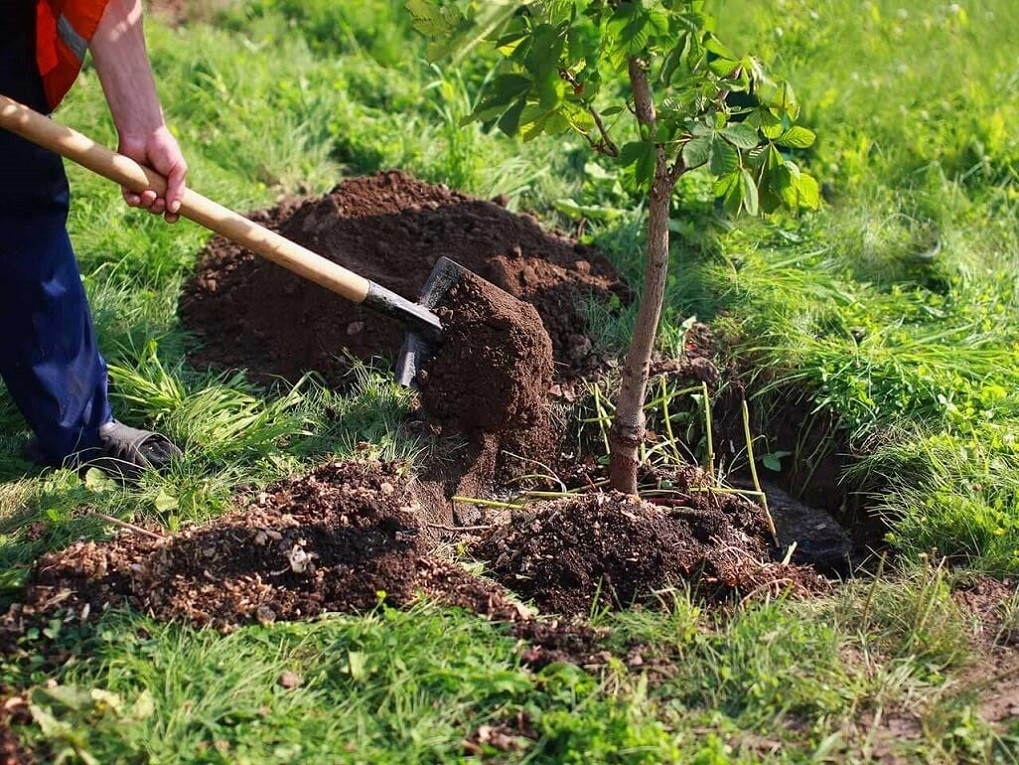 Tree Planting-Asheville Tree Trimming and Stump Grinding Services-We Offer Tree Trimming Services, Tree Removal, Tree Pruning, Tree Cutting, Residential and Commercial Tree Trimming Services, Storm Damage, Emergency Tree Removal, Land Clearing, Tree Companies, Tree Care Service, Stump Grinding, and we're the Best Tree Trimming Company Near You Guaranteed!