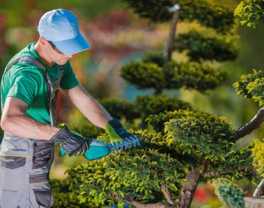 Tree Pruning-Asheville Tree Trimming and Stump Grinding Services-We Offer Tree Trimming Services, Tree Removal, Tree Pruning, Tree Cutting, Residential and Commercial Tree Trimming Services, Storm Damage, Emergency Tree Removal, Land Clearing, Tree Companies, Tree Care Service, Stump Grinding, and we're the Best Tree Trimming Company Near You Guaranteed!