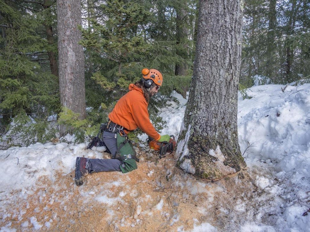 Tree Removal-Asheville Tree Trimming and Stump Grinding Services-We Offer Tree Trimming Services, Tree Removal, Tree Pruning, Tree Cutting, Residential and Commercial Tree Trimming Services, Storm Damage, Emergency Tree Removal, Land Clearing, Tree Companies, Tree Care Service, Stump Grinding, and we're the Best Tree Trimming Company Near You Guaranteed!