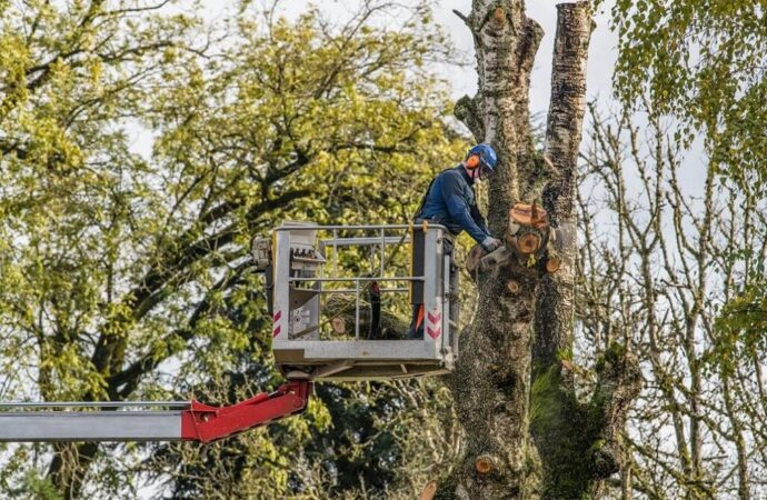 Tree Trimming-Asheville Tree Trimming and Stump Grinding Services-We Offer Tree Trimming Services, Tree Removal, Tree Pruning, Tree Cutting, Residential and Commercial Tree Trimming Services, Storm Damage, Emergency Tree Removal, Land Clearing, Tree Companies, Tree Care Service, Stump Grinding, and we're the Best Tree Trimming Company Near You Guaranteed!
