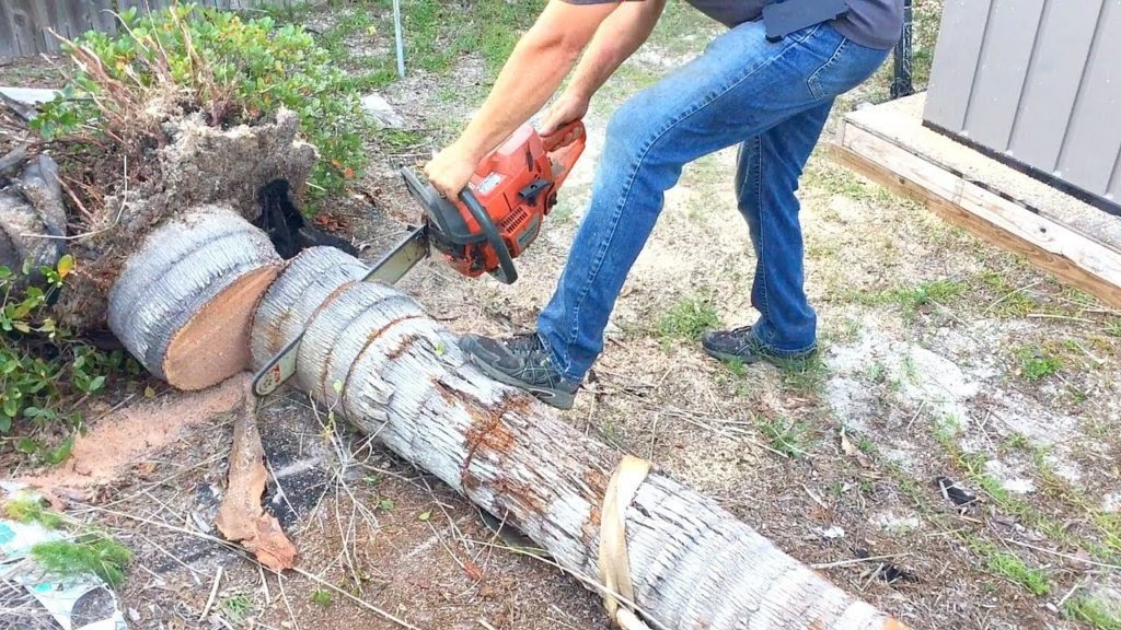 Candler-Asheville Tree Trimming and Stump Grinding Services-We Offer Tree Trimming Services, Tree Removal, Tree Pruning, Tree Cutting, Residential and Commercial Tree Trimming Services, Storm Damage, Emergency Tree Removal, Land Clearing, Tree Companies, Tree Care Service, Stump Grinding, and we're the Best Tree Trimming Company Near You Guaranteed!